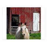 horsew-granero postales