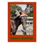 Horsey Season's Greetings Cards