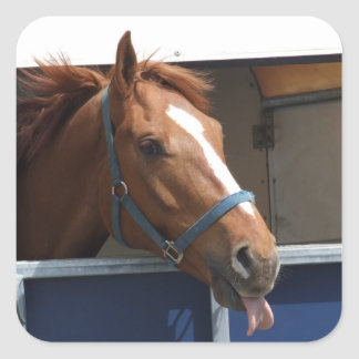 Horsing around - cheeky chestnut horse. square sticker