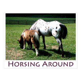 Horsing Around Notecard Postcard
