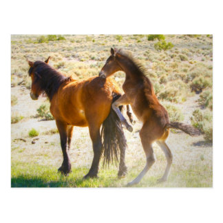 Horsing Around Postcard