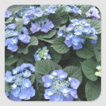 Hortensia Square Stickers
