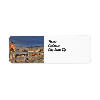 Hosers in a pasture as return address labels