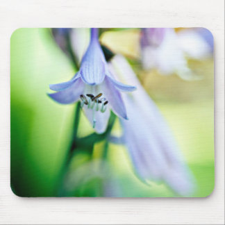 Hosta Bloom Mouse Pad