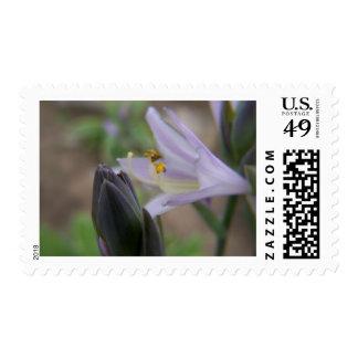 hosta bloom postage