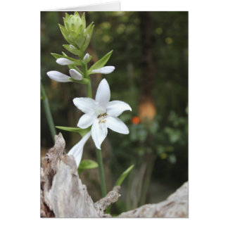 Hosta Bloom with Visitor Greeting Card