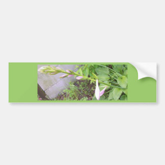 Hosta Buds Bumper Sticker