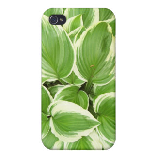 Hosta Cover For iPhone 4