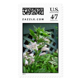 Hosta Florets Postage Stamp