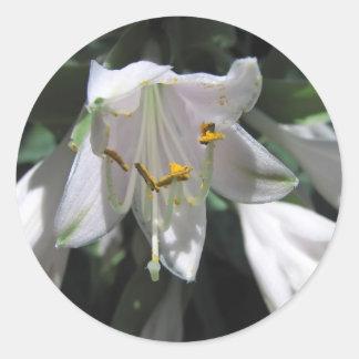 Hosta Flower Classic Round Sticker