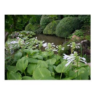 Hosta in a Zen Garden 2 Postcard