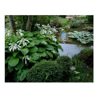 Hosta in a Zen Garden 3 Postcard