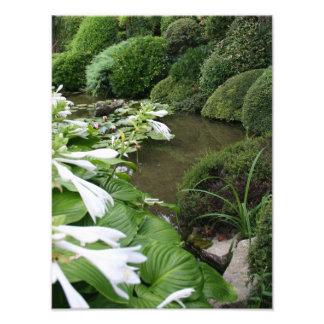 Hosta in a Zen Garden - Photo Print