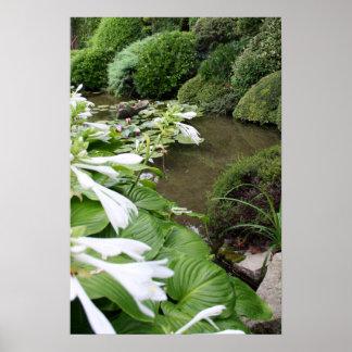 Hosta in a Zen Garden Poster