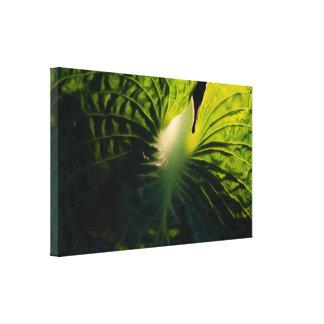 Hosta Leaf on Black Canvas Print