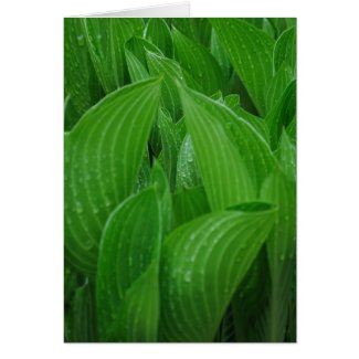 Hosta Leaves with Raindrops Birthday Card
