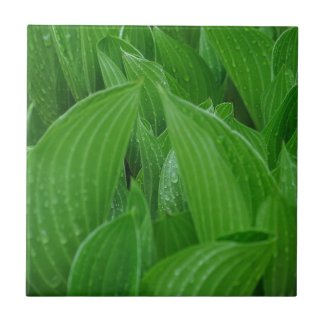 Hosta Leaves with Raindrops Tile