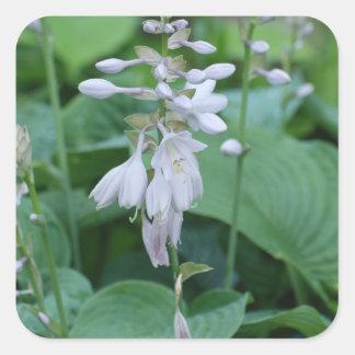 Hosta Plant  Sticker