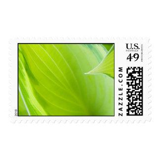 hosta stamps