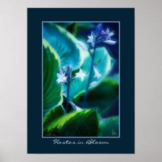 Hostas in Bloom Poster