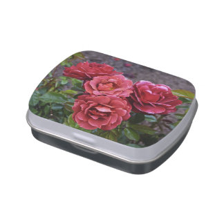 Hot Cocoa Rose Jelly Belly Tins