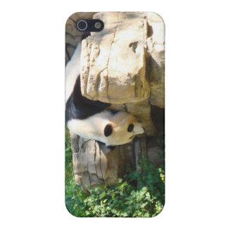 Hot Panda iPhone 5 Covers