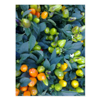 Hot Peppers Plant Postcard