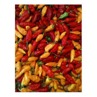Hot Peppers Postcard