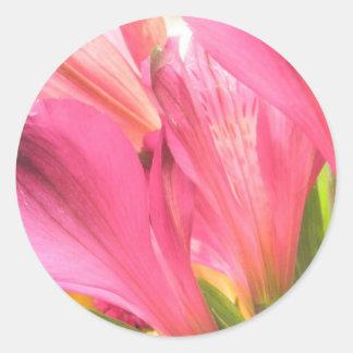 Hot Pink Alstroemeria Flowers Lilies Flower Photo Classic Round Sticker