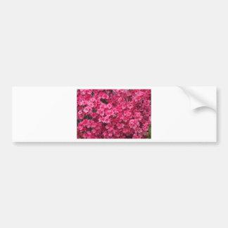 Hot Pink Azalea Blossoms Bumper Sticker