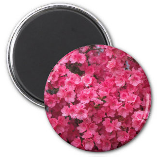 Hot Pink Azalea Blossoms Magnet