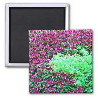 Hot Pink Azaleas and Japanese Maple Monet's Garden Magnet
