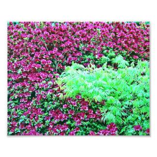 Hot Pink Azaleas and Japanese Maple Monet's Garden Photo Print