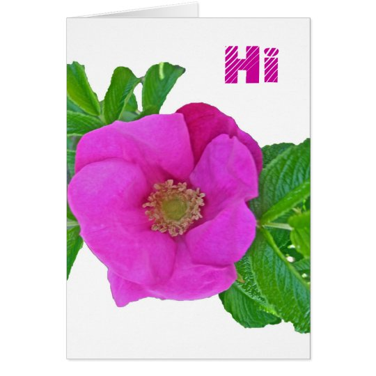 Hot Pink Beach Rose Coordinating Items Card