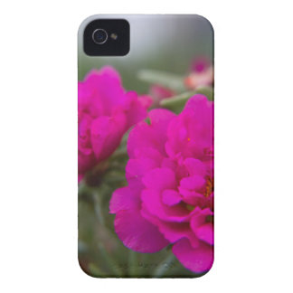 Hot pink begonia flowers iPhone 4 case
