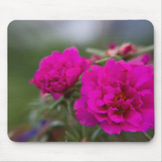 Hot pink begonia flowers mouse pad