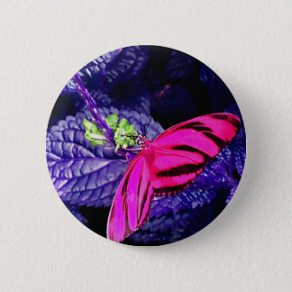 Hot Pink Butterfly on Bright Purple Plant Button