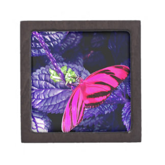 Hot Pink Butterfly on Bright Purple Plant Gift Box