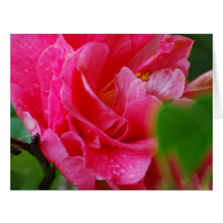 Hot Pink Camelia Flower Greeting Card
