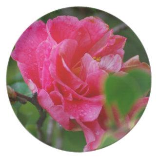 Hot Pink Camelia Flower Dinner Plates