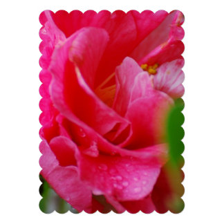 Hot Pink Camelia Flower Personalized Invites