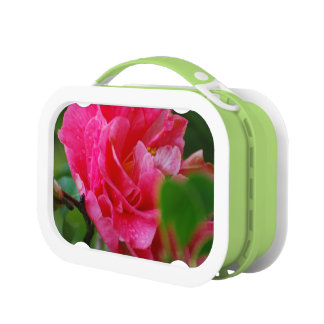 Hot Pink Camelia Flower Lunch Boxes