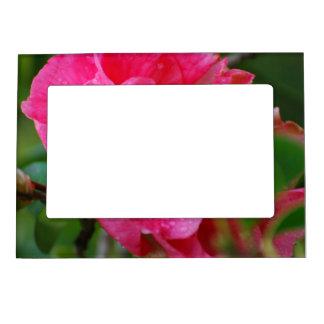 Hot Pink Camelia Flower Picture Frame Magnet
