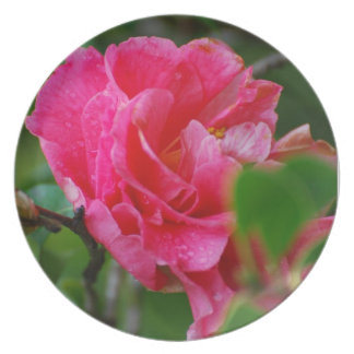Hot Pink Camelia Flower Party Plate