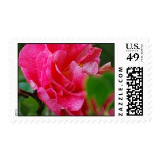 Hot Pink Camelia Flower Postage Stamps