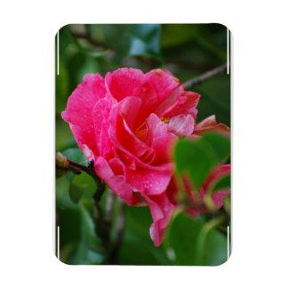 Hot Pink Camelia Flower Rectangular Magnet