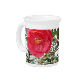 Hot Pink Camellia Growing On A Tree, Pitcher