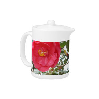 Hot Pink Camellia Growing On A Tree, Teapot