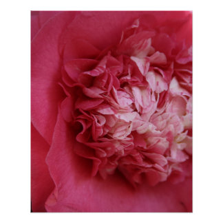 Hot Pink Camellia Poster