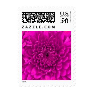 Hot Pink Chrysanthemum Floral Postage Stamps